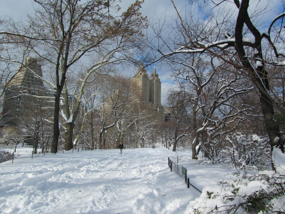 Central Park in the snow in winter