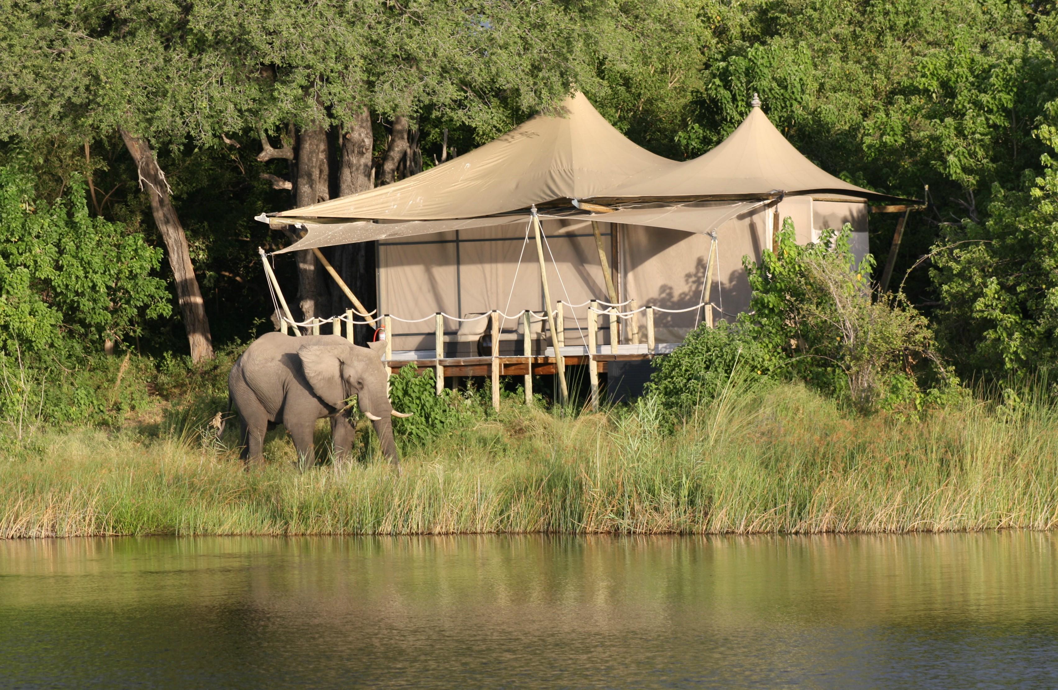 Safari camp tent with elephant tanzania