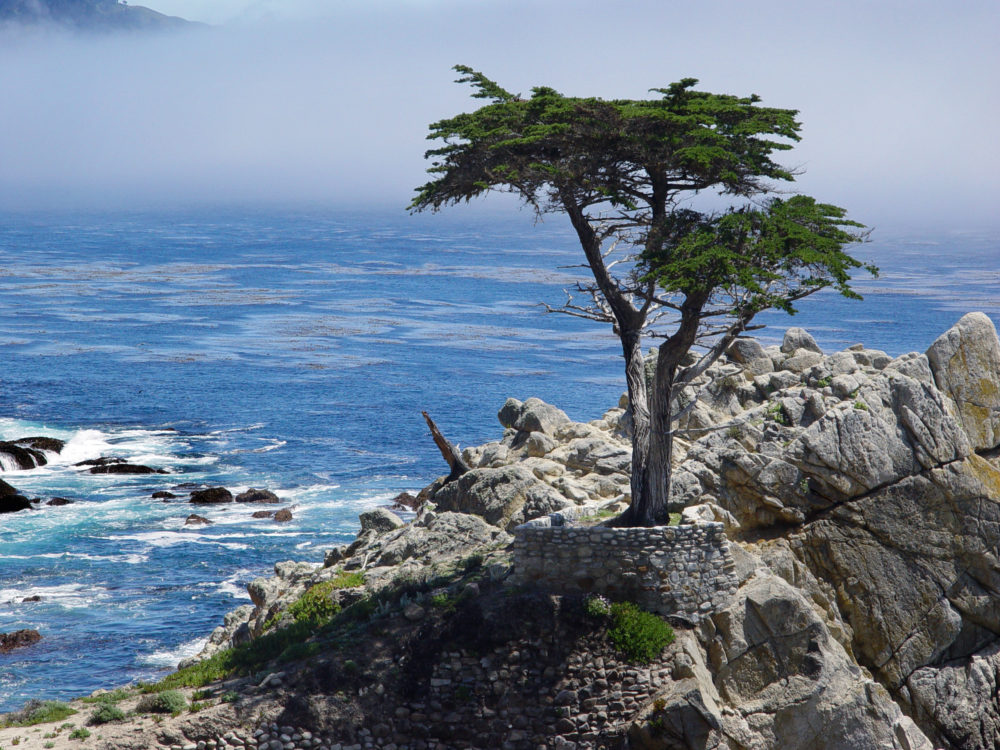 Cypress tress 17 mile drive california