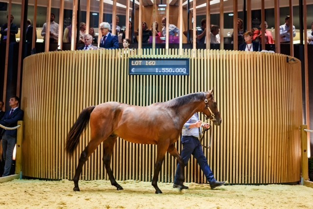 Yearling sale auction Deauville