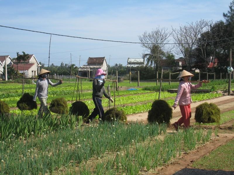 vietnamese farm life